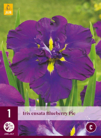 Iris ensata blueberry pie