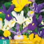 Iris hollandica mix